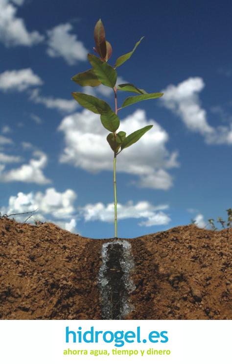 Hidrogel para plantas agricultura lista de precios for Plantas forestales